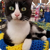 Adopt A Pet :: Cookie - Wauconda, IL
