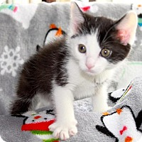 Adopt A Pet :: Kisses - Union, KY