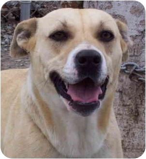 Terrier (Unknown Type, Medium) Mix Dog for adoption in Campbellsville, Kentucky - Aqua