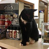Adopt A Pet :: Lenny - Norwich, NY