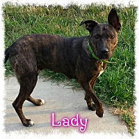 Shepherd (Unknown Type) Dog for adoption in Crandall, Georgia - Lady