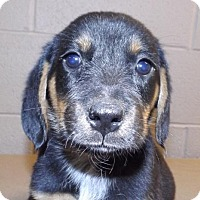 Adopt A Pet :: Seager - Oxford, MS