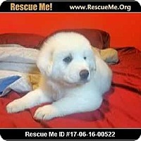 Adopt A Pet :: Cotton - Adamsville, TN