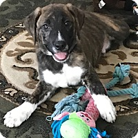 Adopt A Pet :: Marco - Sagaponack, NY