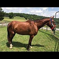 Adopt A Pet :: Cash - Gallatin, TN