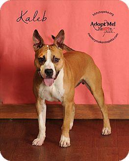 Pit Bull Terrier Mix Dog for adoption in Topeka, Kansas - Kaleb