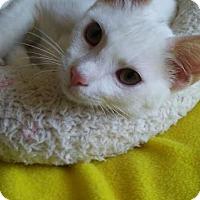 Adopt A Pet :: Keith - Tampa, FL