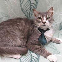 Adopt A Pet :: DaVinci - Lexington, NC