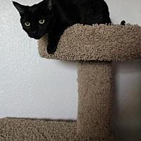 Adopt A Pet :: Coda - Phoenix, AZ