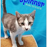 Adopt A Pet :: Spinner - Commerce, TX
