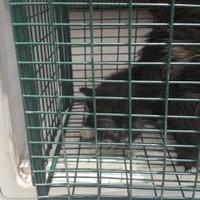 Adopt A Pet :: Jeann - Belle Chasse, LA