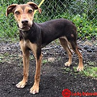 Adopt A Pet :: Ehu - Kailua-Kona, HI
