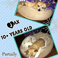 Adopt A Pet :: jax - Eugene, OR