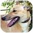 Photo 1 - Greyhound Dog for adoption in Dallas, Texas - Saylor