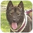 Photo 1 - Jindo/Shiba Inu Mix Dog for adoption in Southern California, California - Iri