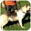 Photo 2 - German Shepherd Dog Dog for adoption in Fort Worth, Texas - JASON - ADOPTION PENDING