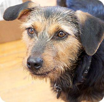 Terrier (Unknown Type, Medium) Mix Dog for adoption in Huntsville, Alabama - Harley