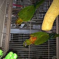Adopt A Pet :: Bangles & Trooper - Punta Gorda, FL