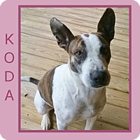Adopt A Pet :: KODA - ADV. OBEDIENCE TRAINED - Dallas, NC