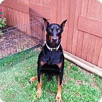 Adopt A Pet :: Banks - Fort Worth, TX