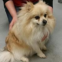 Adopt A Pet :: Nikki - Crescent, OK