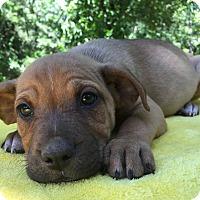 Adopt A Pet :: Butch - Kittery, ME