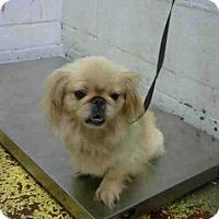 Adopt A Pet :: CRYSTAL - Atlanta, GA