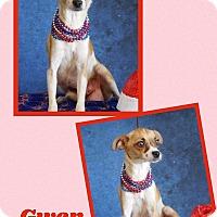 Adopt A Pet :: Gwen - Scottsdale, AZ