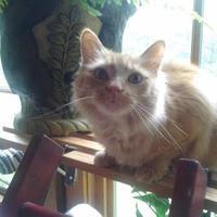 Adopt A Pet :: Charlie - Tryon, NC