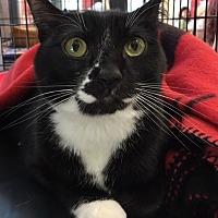 Adopt A Pet :: Eric - Pasadena, CA