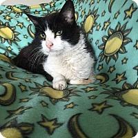 Adopt A Pet :: Bergerac - Addison, IL