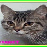 Adopt A Pet :: HARRIET - Fort Walton Beach, FL