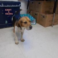 Adopt A Pet :: PUMPKIN - Circleville, OH