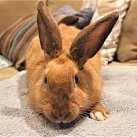Adopt A Pet :: Kensington - Hillside, NJ