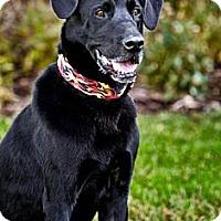 Adopt A Pet :: Ben - Loveland, CO