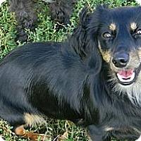 Adopt A Pet :: KUDO - cameron, MO