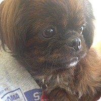Adopt A Pet :: Tango - Oklahoma City, OK