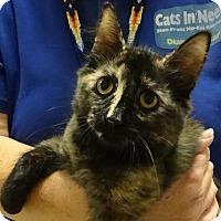Adopt A Pet :: HEDDY - Diamond Bar, CA