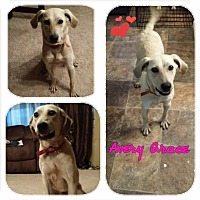 Adopt A Pet :: Avery Grace - Lewisville, IN