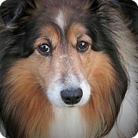 Adopt A Pet :: Precious - Marietta, GA