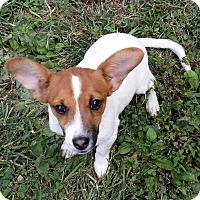 Adopt A Pet :: Gizzy - Normandy, TN