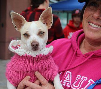 Chihuahua Dog for adoption in Redondo Beach, California - TinkerBelle-ADOPT Me!
