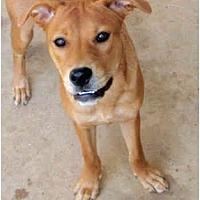 Adopt A Pet :: Laina - Houston, TX