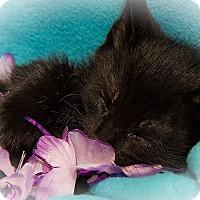 Adopt A Pet :: Ajax - San Juan Capistrano, CA