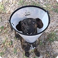 Adopt A Pet :: Pepper - Port Charlotte, FL