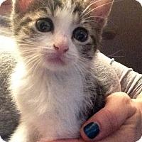Adopt A Pet :: Chutney - River Edge, NJ
