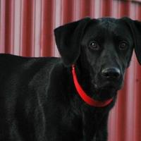 Adopt A Pet :: Jett - Buffalo, WY