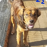 Adopt A Pet :: Buzz - Lawrenceburg, TN