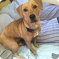 Adopt A Pet :: Maggie - Iowa, Illinois and Wisconsin, IA