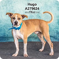 Adopt A Pet :: HUGO - Conroe, TX